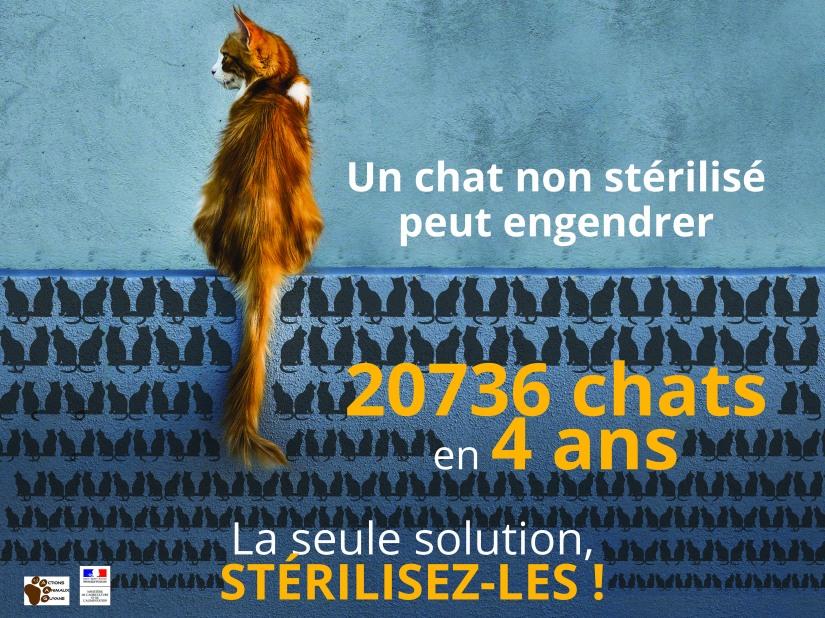 Visuel stérilisation chat 4x3_V2 définirif